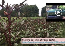 Farming slide of corn stalks